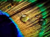 羽毛上的一粒粒水珠