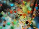 蒲公英上的彩色小水珠