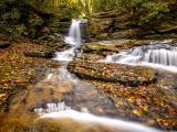 林中的涓涓流水