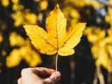 深秋里的思念
