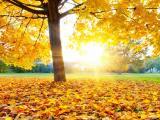 秋天里的阳光