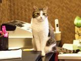 桌子上的猫咪