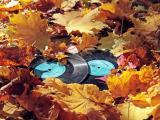 落叶中的黑胶唱片