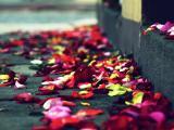 落了一地的花瓣