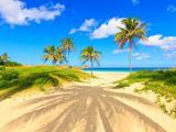 沙滩棕榈树