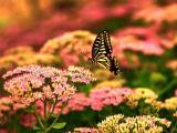 花卉上的漂亮蝴蝶