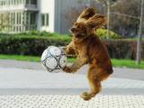 看看我踢足球的技术