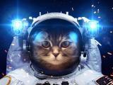 飞行员小猫