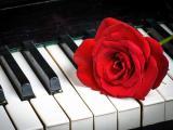 琴键上绽放的花朵