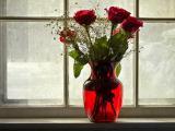 窗台的红玫瑰插花