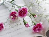 乐谱上的康乃馨